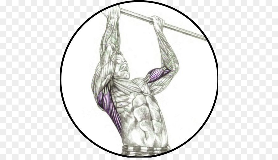 Chin Up Pull Up Muscle Exercise Arm Png Download 512512 Free