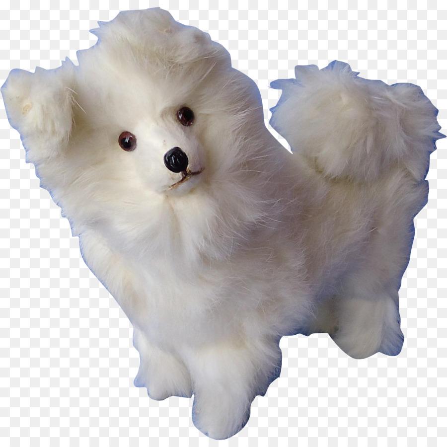 German Spitz Klein German Spitz Mittel American Eskimo Dog Japanese