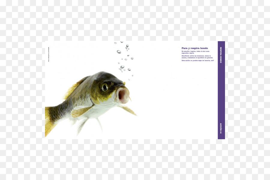 Cavidad Nasal Peces Nuestra hueso Nasal Olor - los peces Formatos De ...