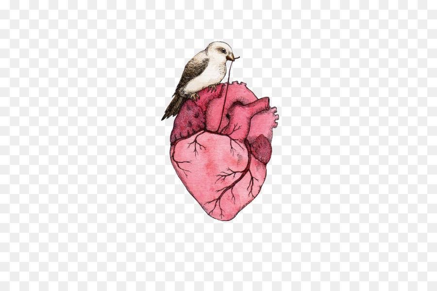 Heart Anatomy Drawing - heart png download - 429*600 - Free ...