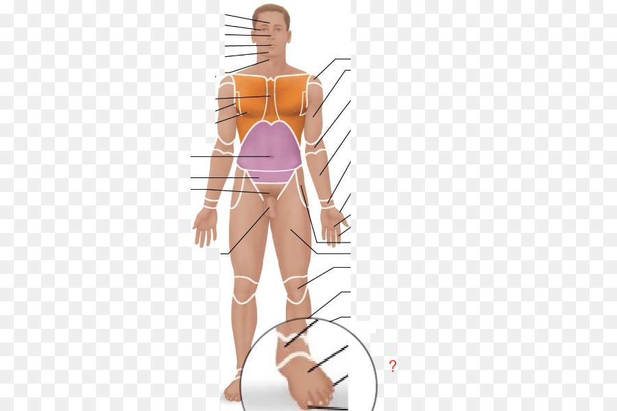 Human Anatomy & Physiology Human body Anatomical terminology - Foot ...