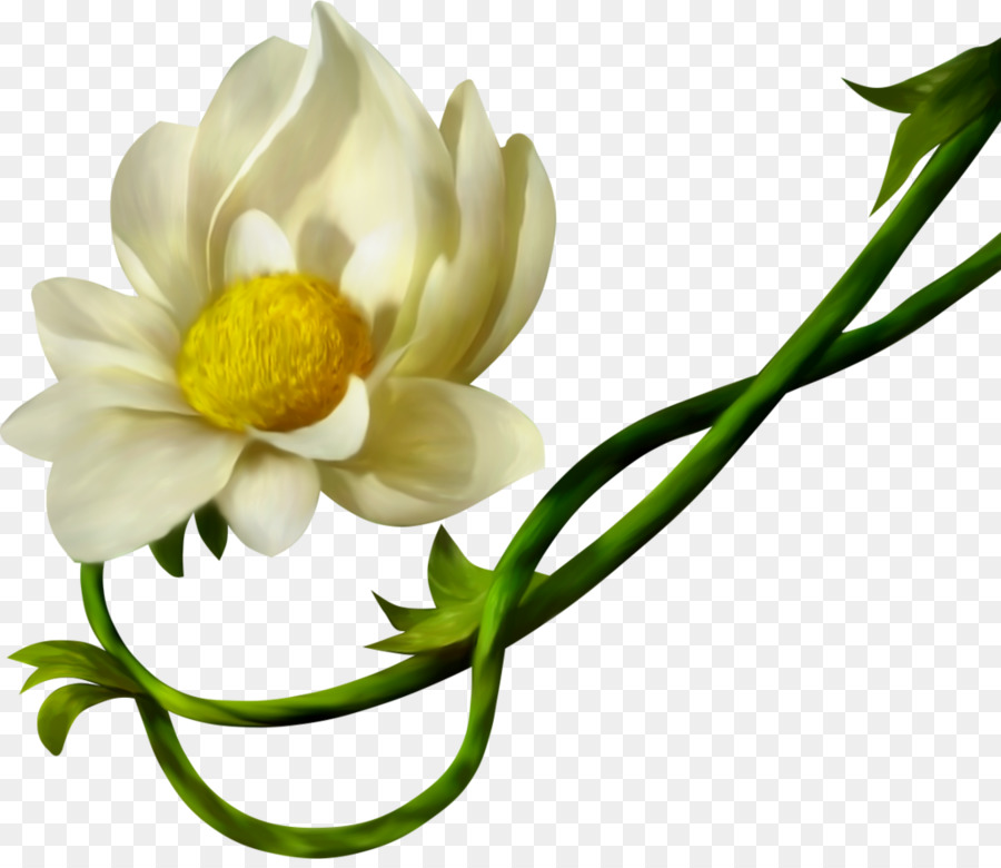Petal yellow cut flowers white flower png download 1024878 petal yellow cut flowers white flower mightylinksfo