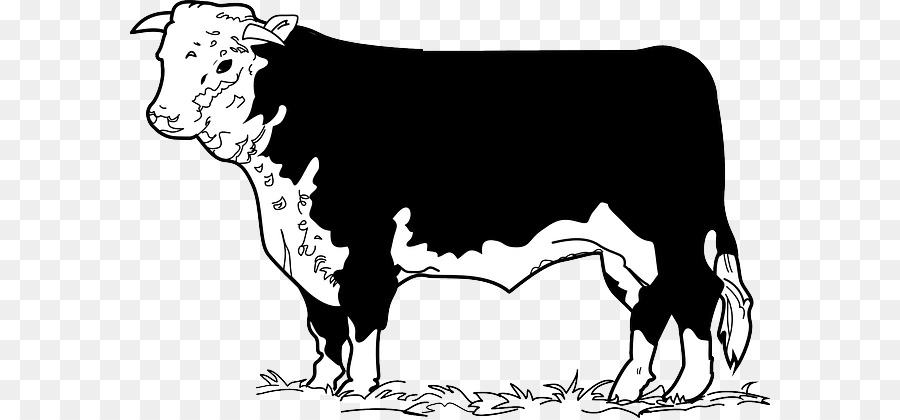 Beef Cattle Angus Cattle Hereford Cattle Beefsteak Clip Art