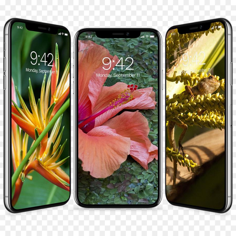 Desktop Wallpaper Iphone X Tropics Wallpaper Tropical Collection