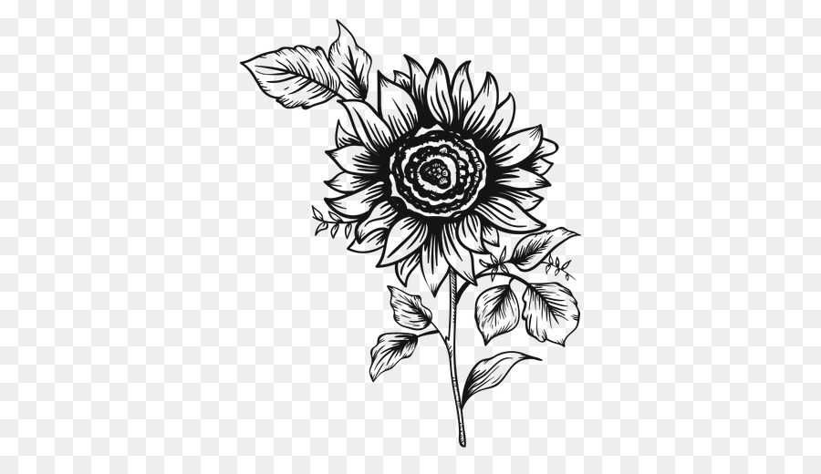 common sunflower drawing painting girasoles png download 512 512