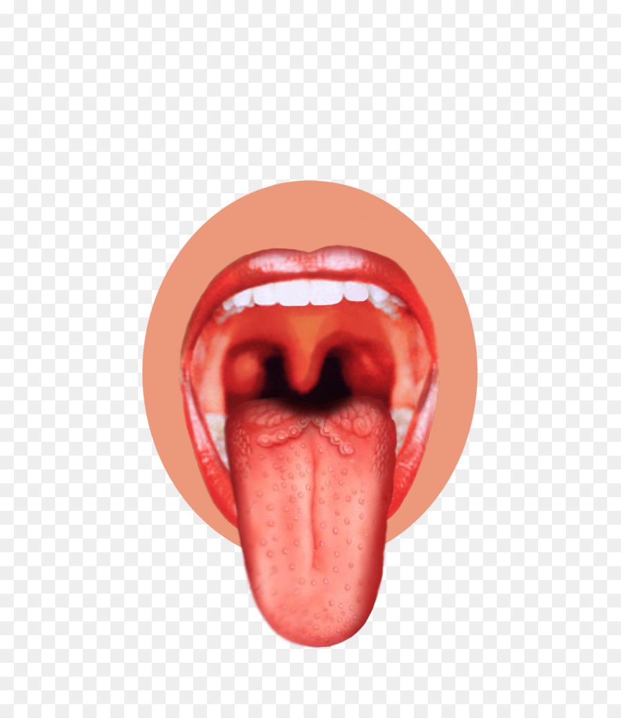 Taste Bud Tongue Map Sense Tongue Png Download 6821023 Free