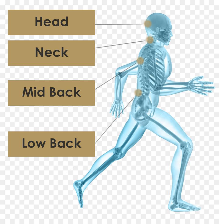Human Skeleton Running Hip Skeleton Png Download 900901 Free