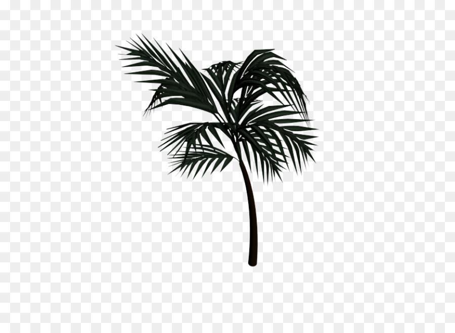 Asian Palmyra Palm Tree png download - 645*645 - Free Transparent