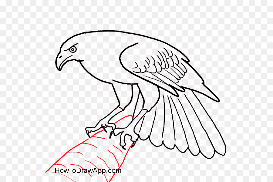 Bird Line Drawing Png Download 600600 Free Transparent