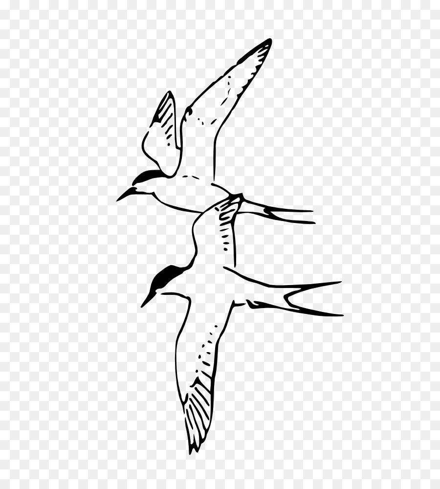Pájaro zorro Ártico Pico charrán Ártico - Aves png dibujo ...