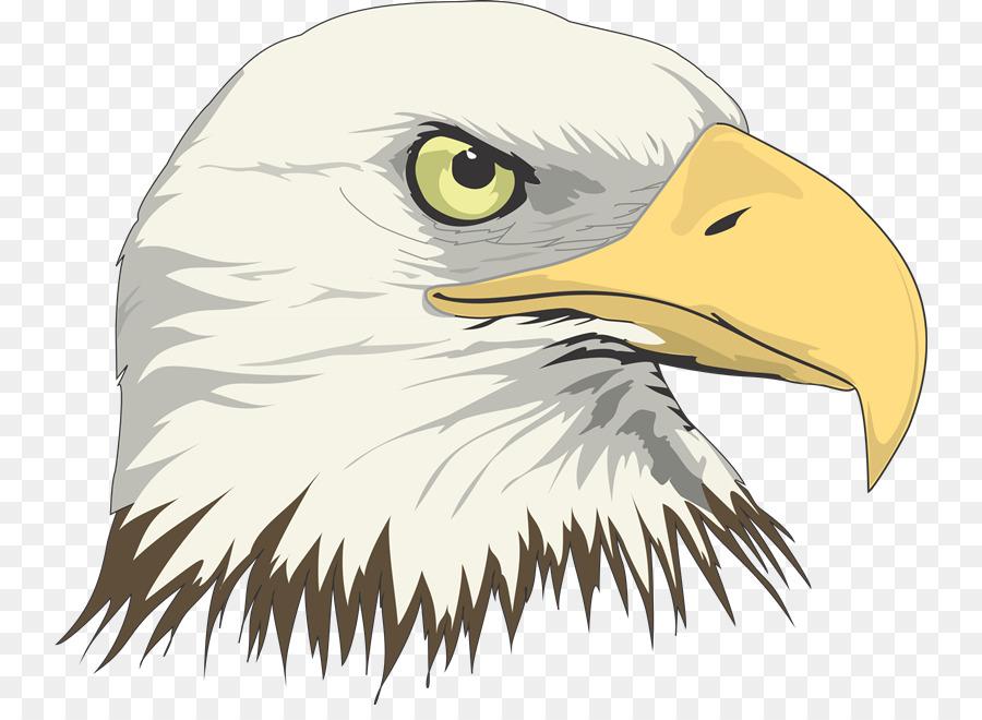 Águila Calva Dibujo, Arte - águila png dibujo - Transparente png ...