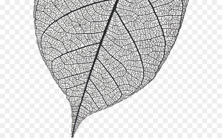 Tree Drawing png download - 632*560 - Free Transparent