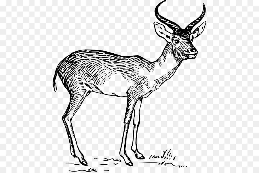 740+ Gambar Hewan Pronghorn Antelope Terbaru