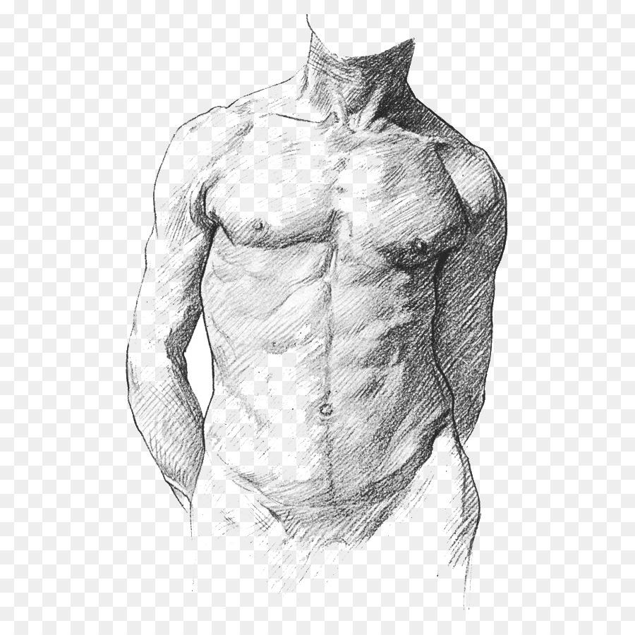 Human Anatomy For Art Students Human Anatomy For Artists Human Body