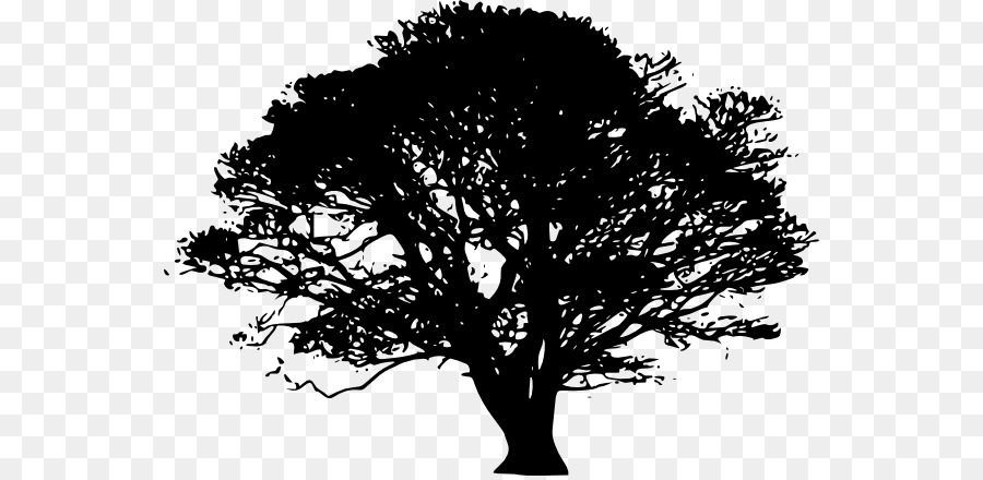 oak tree drawing clip art tree png download 600 436 free rh kisspng com oak tree silhouette clip art free Family Tree Silhouette Clip Art