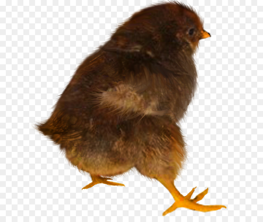 Chicken Desktop Wallpaper Animal - chicken png download - 687*745 - Free Transparent Chicken png Download.