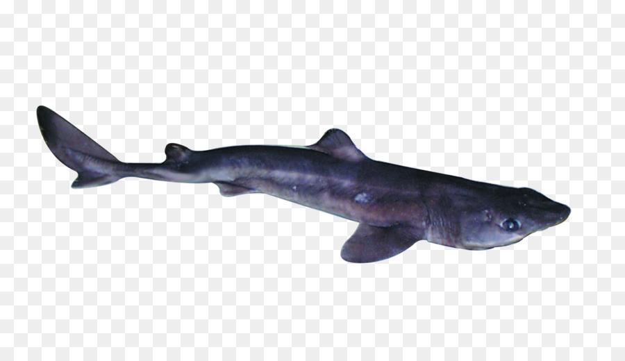 Requiem tiburones de Aleta de tiburón Espinoso Mariposa mielga peces ...