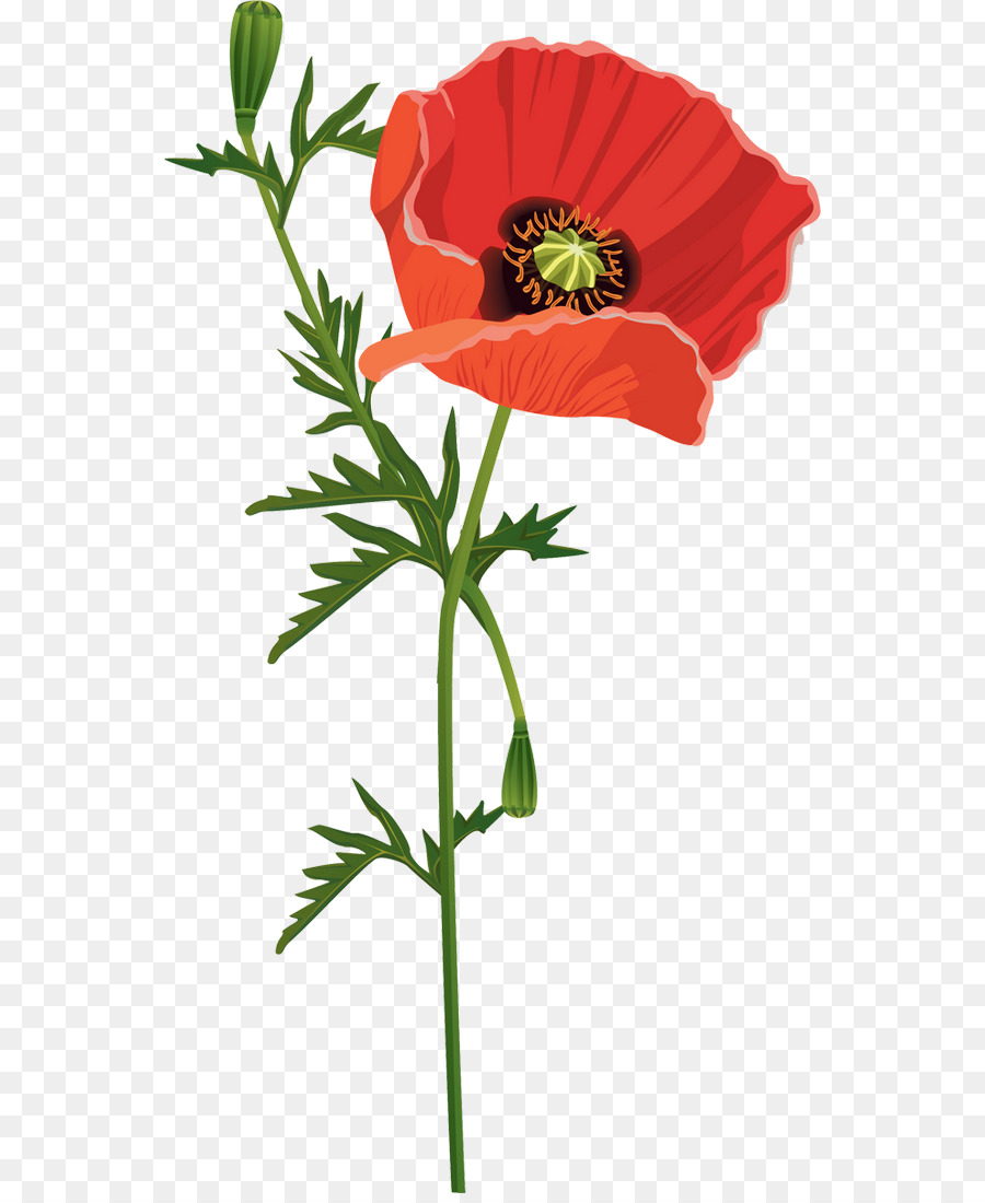 Common Poppy Flower Opium Poppy Red Wavy Annual Report Template