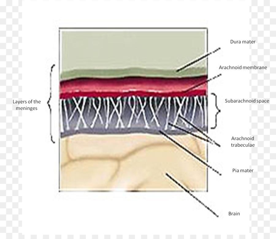 Gray\'s Anatomy Meninges Dura mater Cerebellar tentorium - Brain png ...
