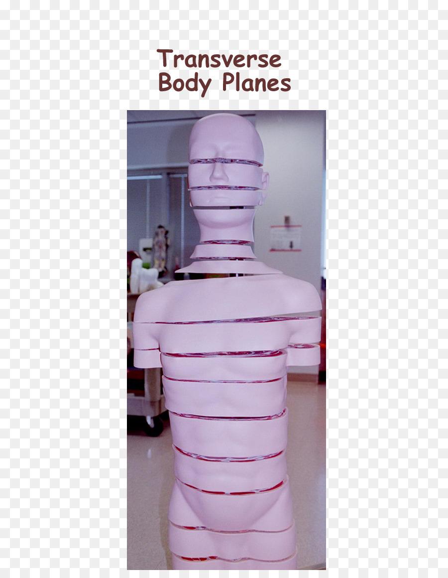 Anatomical plane Anatomy Transverse plane Sagittal plane - frontal ...