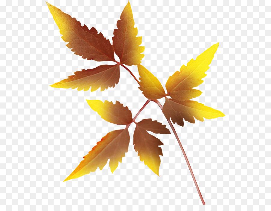 Yaprak Sonbahar Yaprakları Küçük Resim Boyama Yaprak Png Indir