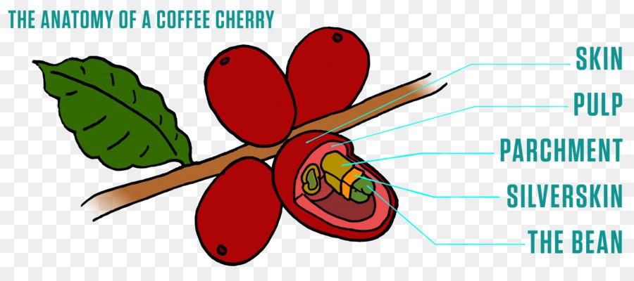 Fruit Coffee bean Peaberry Metropolis Coffee Company - Coffee png ...