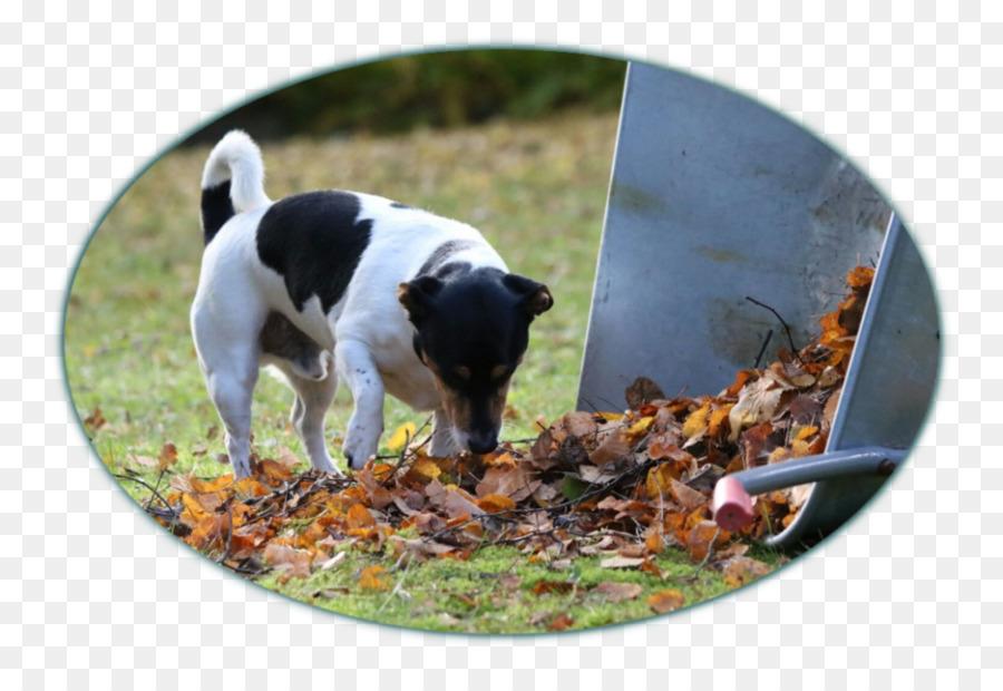 Hunderasse Appenzeller Sennenhund Png Herunterladen 1004