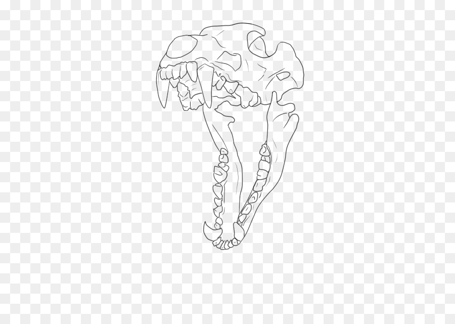 Drawing Skull Line art Dog Anatomy - Wolf skull png download - 427 ...