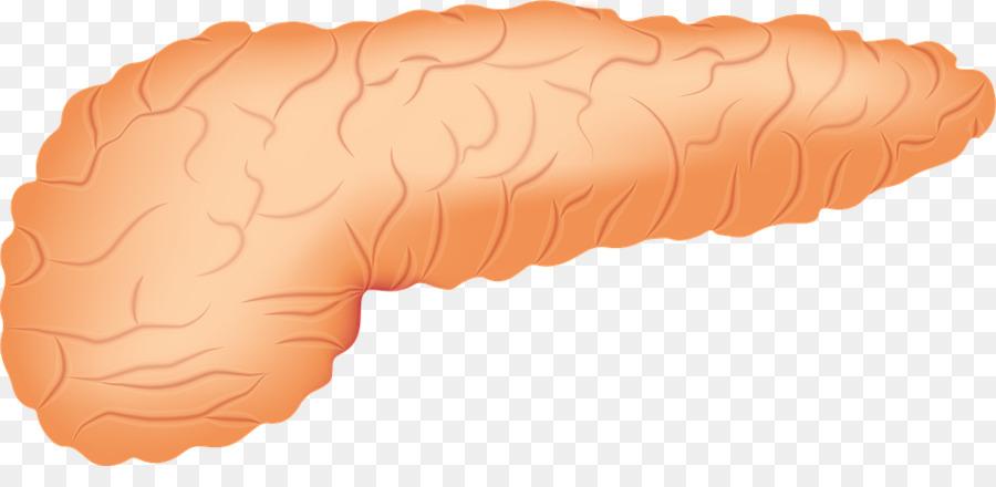 Pancreas Pancreatic Cancer Acute Pancreatitis Human Anatomy