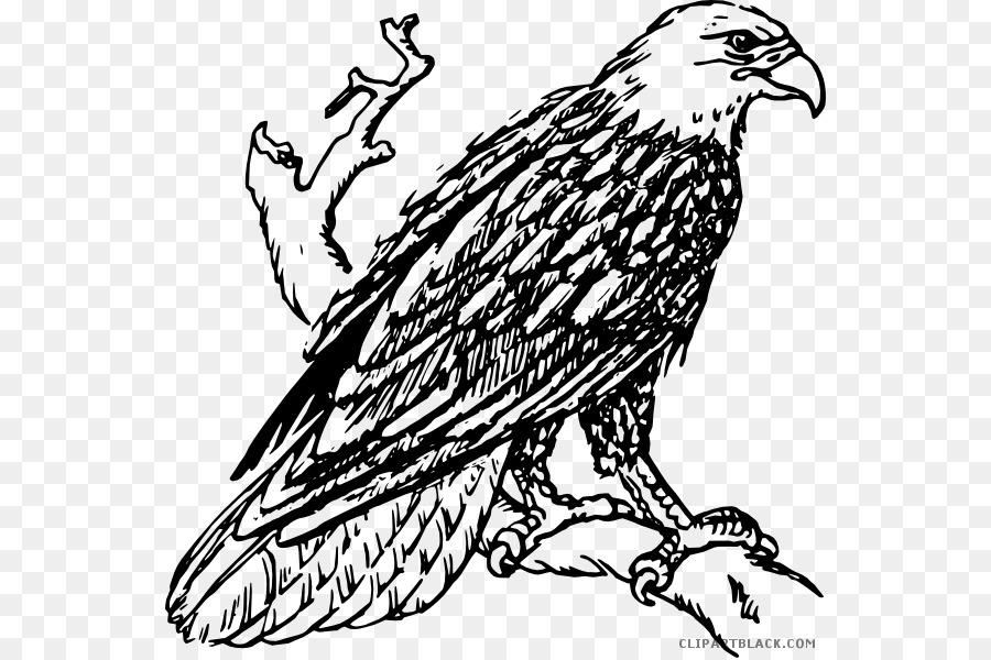 Águila el Águila de cola Blanca águila de Oro Clip art - águila png ...