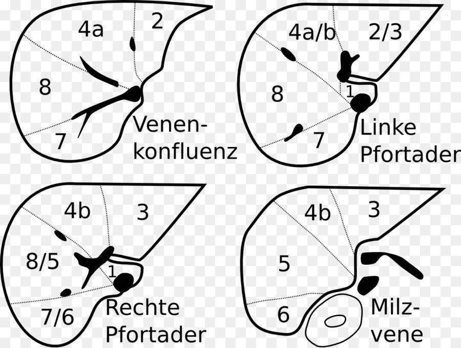 Liver Segment Anatomy Portal Vein Segment Png