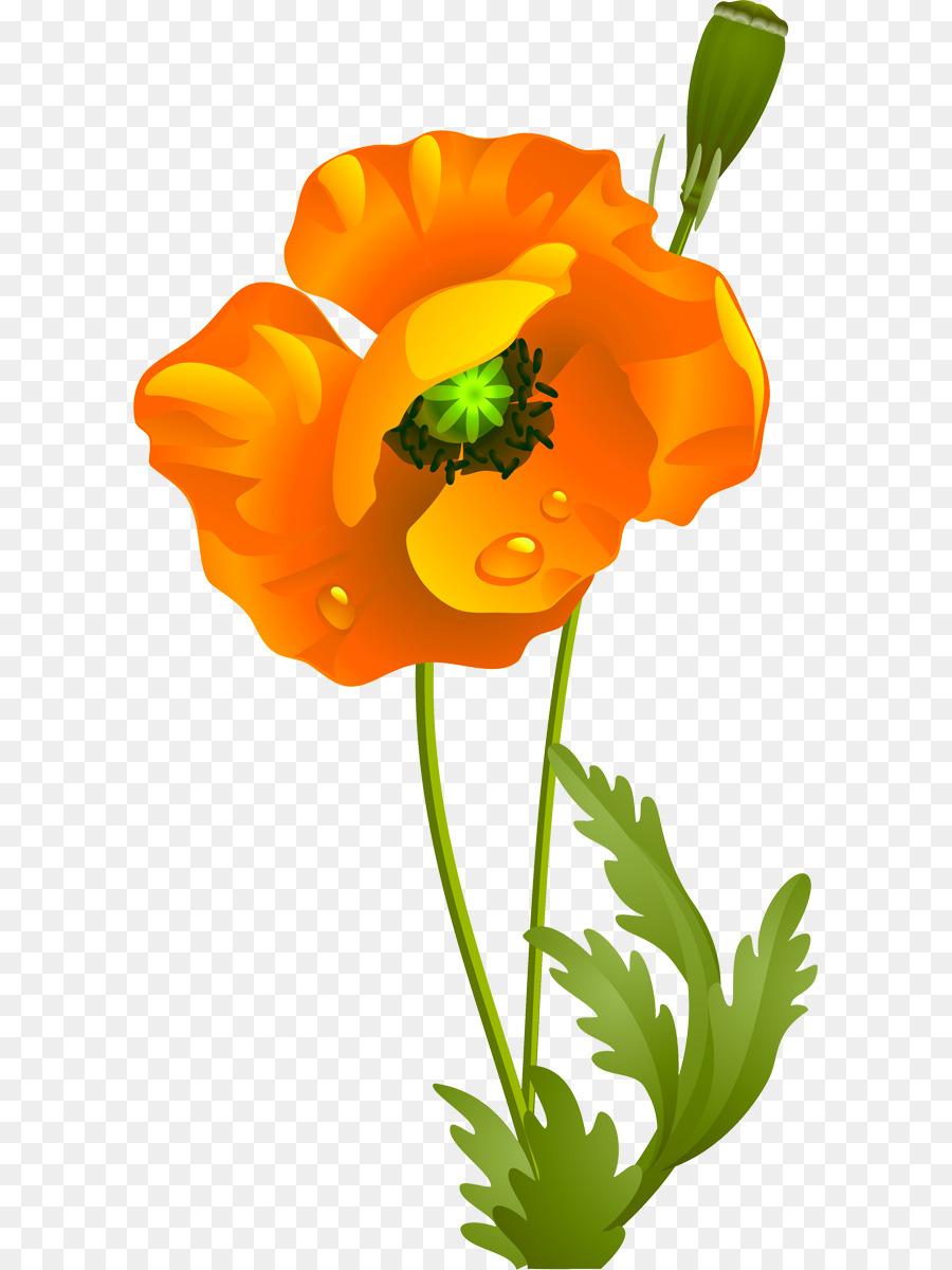 California poppy cut flowers wildflower clip art poppies png california poppy cut flowers wildflower clip art poppies mightylinksfo