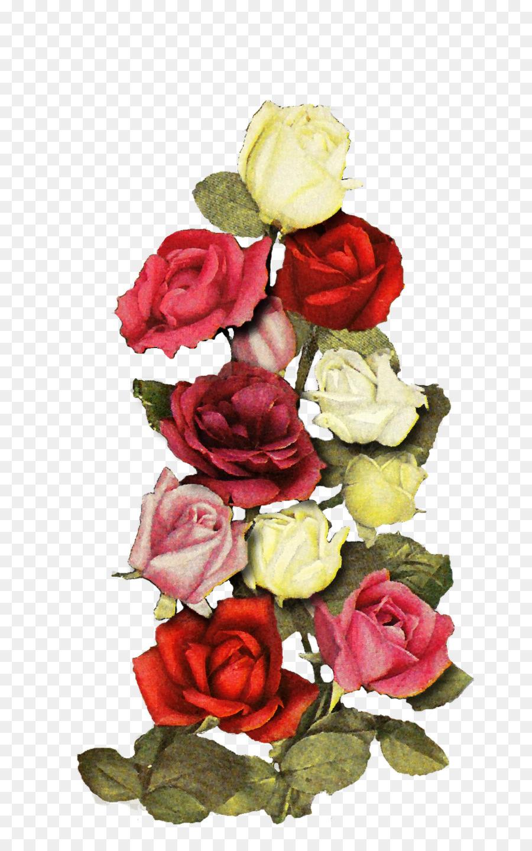 jardin des roses de chou rose motif floral fleurs coupées - fleur