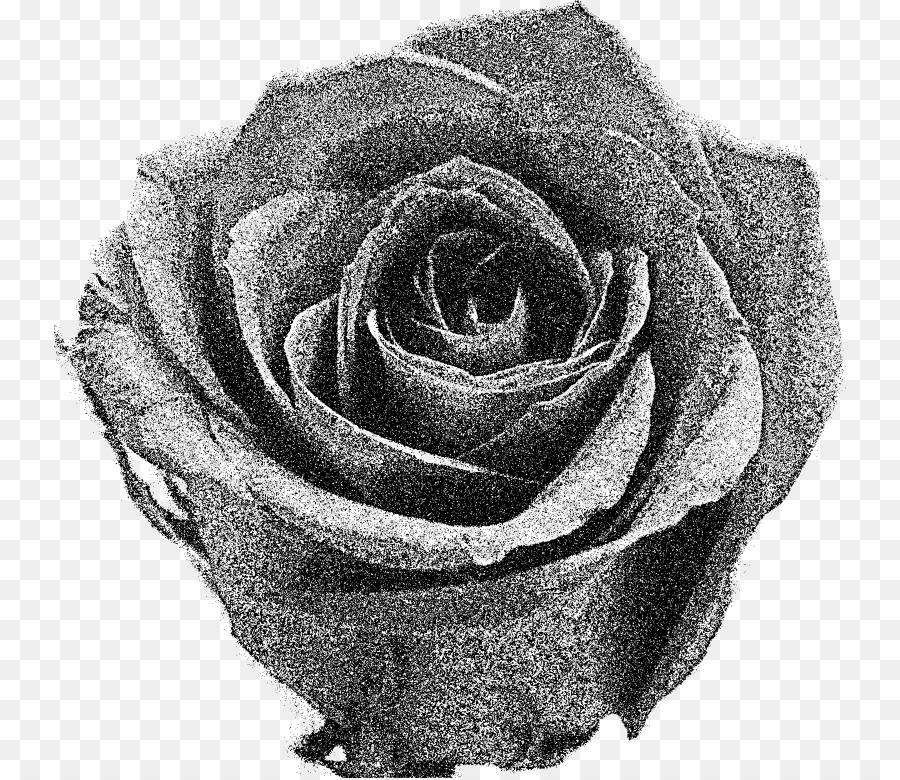 Garden Roses Black And White Flower Clip Art Rose Png Download