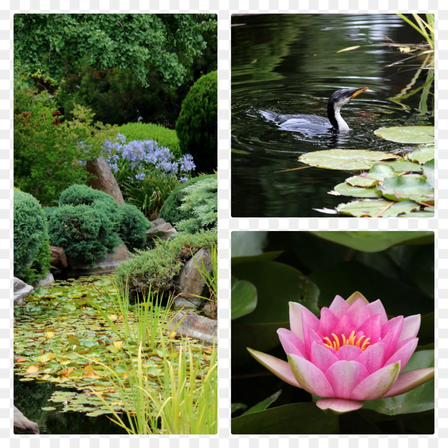 Jardin Botanique De La Flore De L Etang D Eau De Fleur Jardin