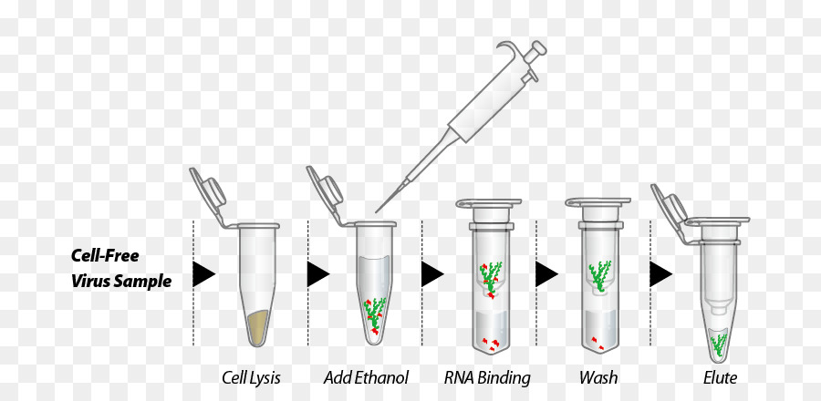 rna purification from blood  basicexorna basic rna