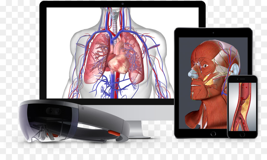 BioDigital Human anatomía del sistema Nervioso del cuerpo Humano ...