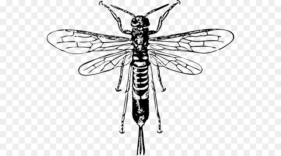 Biene Hornisse Insekt Wespe Clip Art Schwarze Hornisse Png