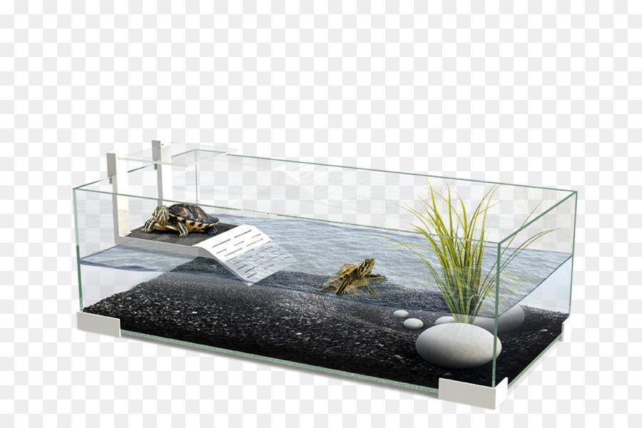 Turtle Reptile Aquarium Lizard Terrarium Aquarium Png Download