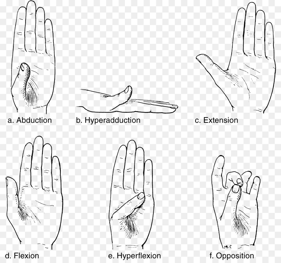 Thumb Joint Anatomy Wrist Human body - hand png download - 868*831 ...