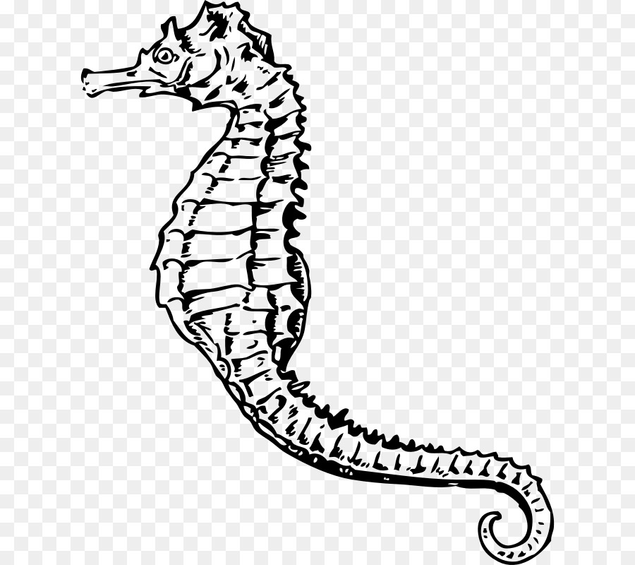 Black And White Kissing Seahorse Drawings Free Download Oasis Dl Co