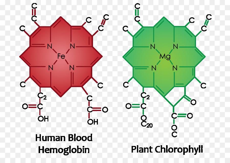 Image result for chlorophyll molecule