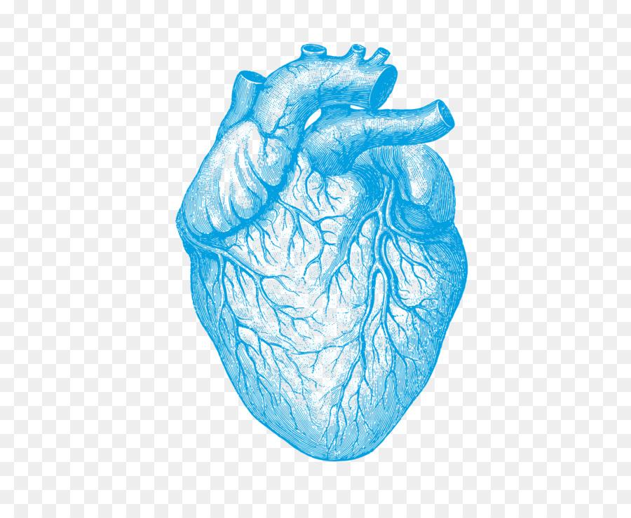 Anatomía humana en la Comprensión de la Enfermedad Cardíaca cuerpo ...