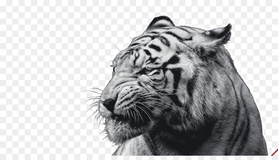 White Tiger Felidae Desktop Wallpaper Cat