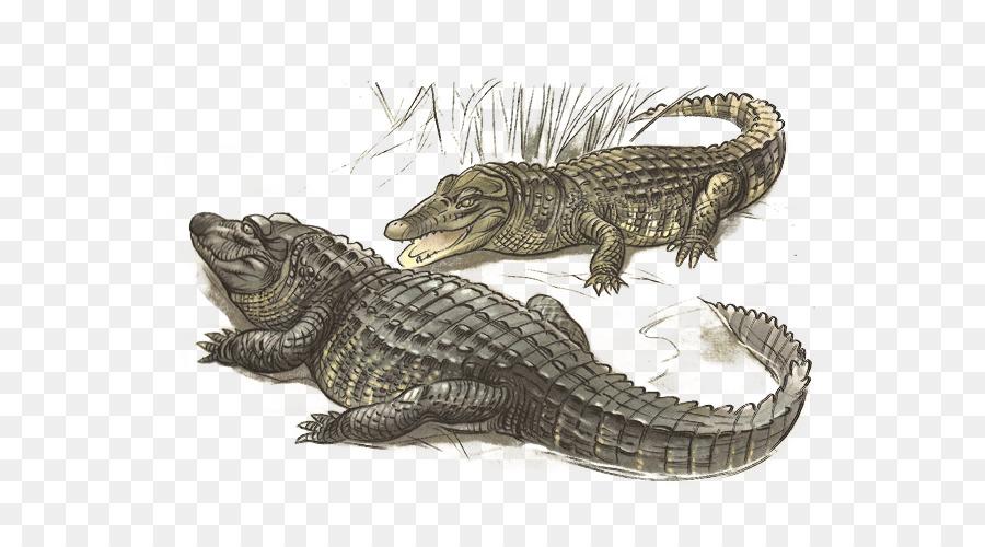 Cocodrilo del nilo cocodrilo Americano Fauna - cocodrilo png dibujo ...