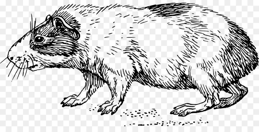 Conejillo de indias de Roedores Domésticos conejo Clip art - cerdo ...