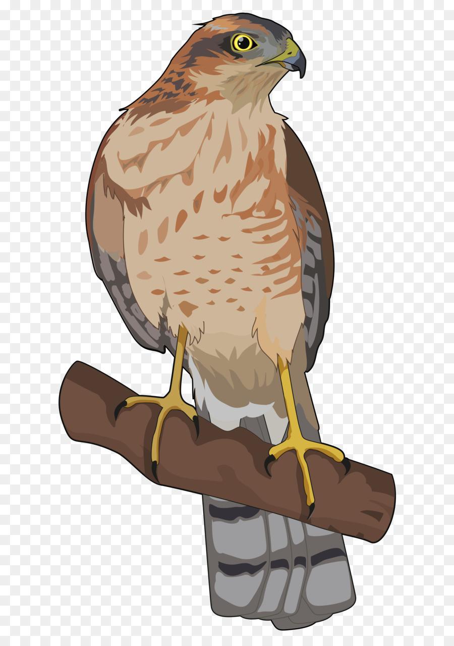 Halcón Pájaro cernícalo Común Anatomía de la Caldera de Taburiente ...