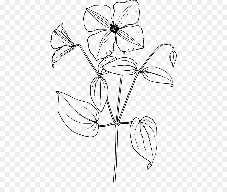 Árabe jazmín Dibujo de la Flor de Croquis - flor png dibujo ...