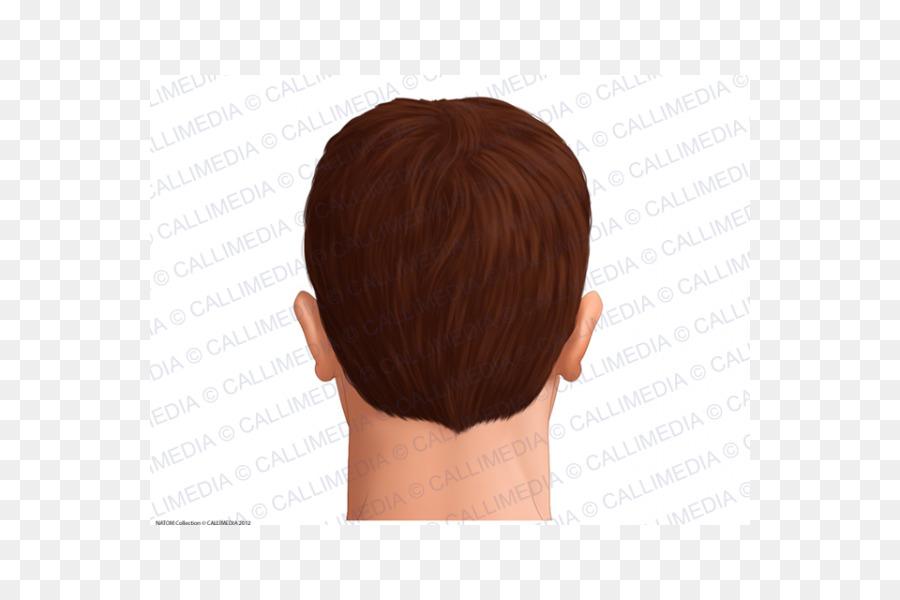 Head Anatomy Skin Hair Man - hair png download - 600*600 - Free ...