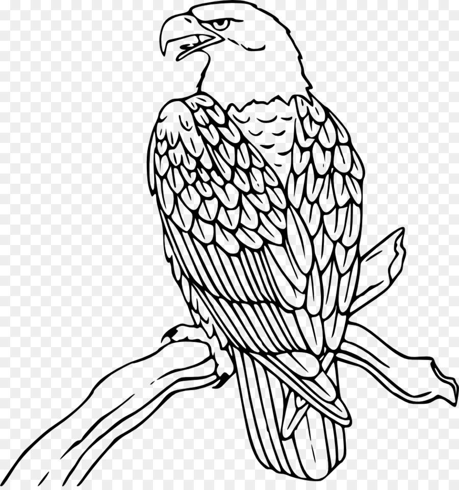 Águila calva libro para Colorear de Dibujo de Aves - águila png ...